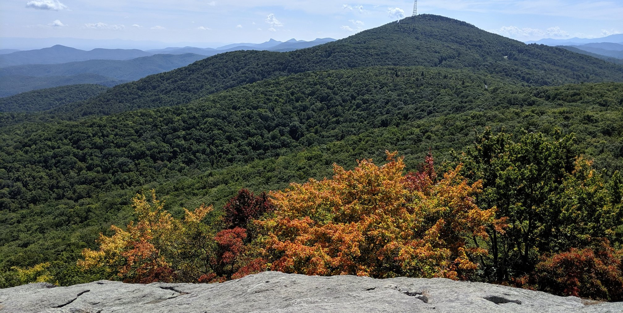 Maples and Sassafras Beacon Ridge
