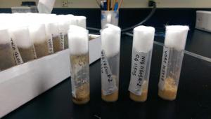 vials of fruit flies