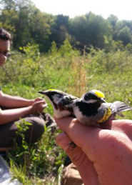 warblers in the field