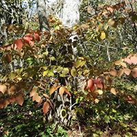 browning leaves on Elk Knob