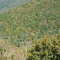 view of mostly green trees from elk knob state park