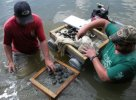 Gangloff and student sorting freshwater mussels in the river