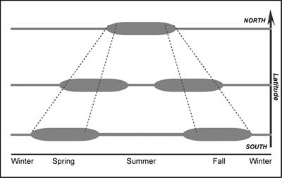 Model of phenology for an evergreen plant as a function of latitude