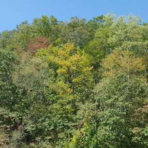 early fall color changes; trees mostly green but with spots of yellow and red