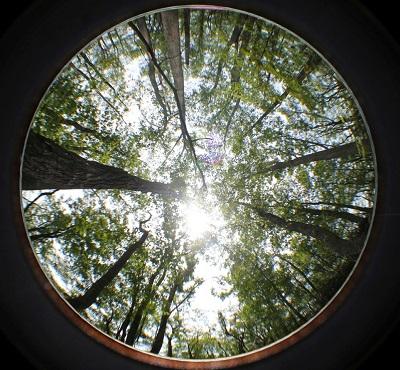 gilley_leaf.jpg